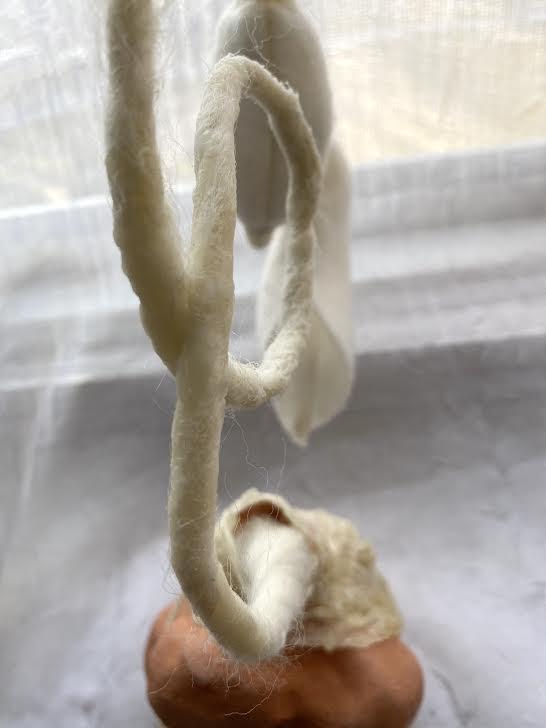 Amanda Lynn Hoopingarner - Aristolochia liliales // Invading Pelican