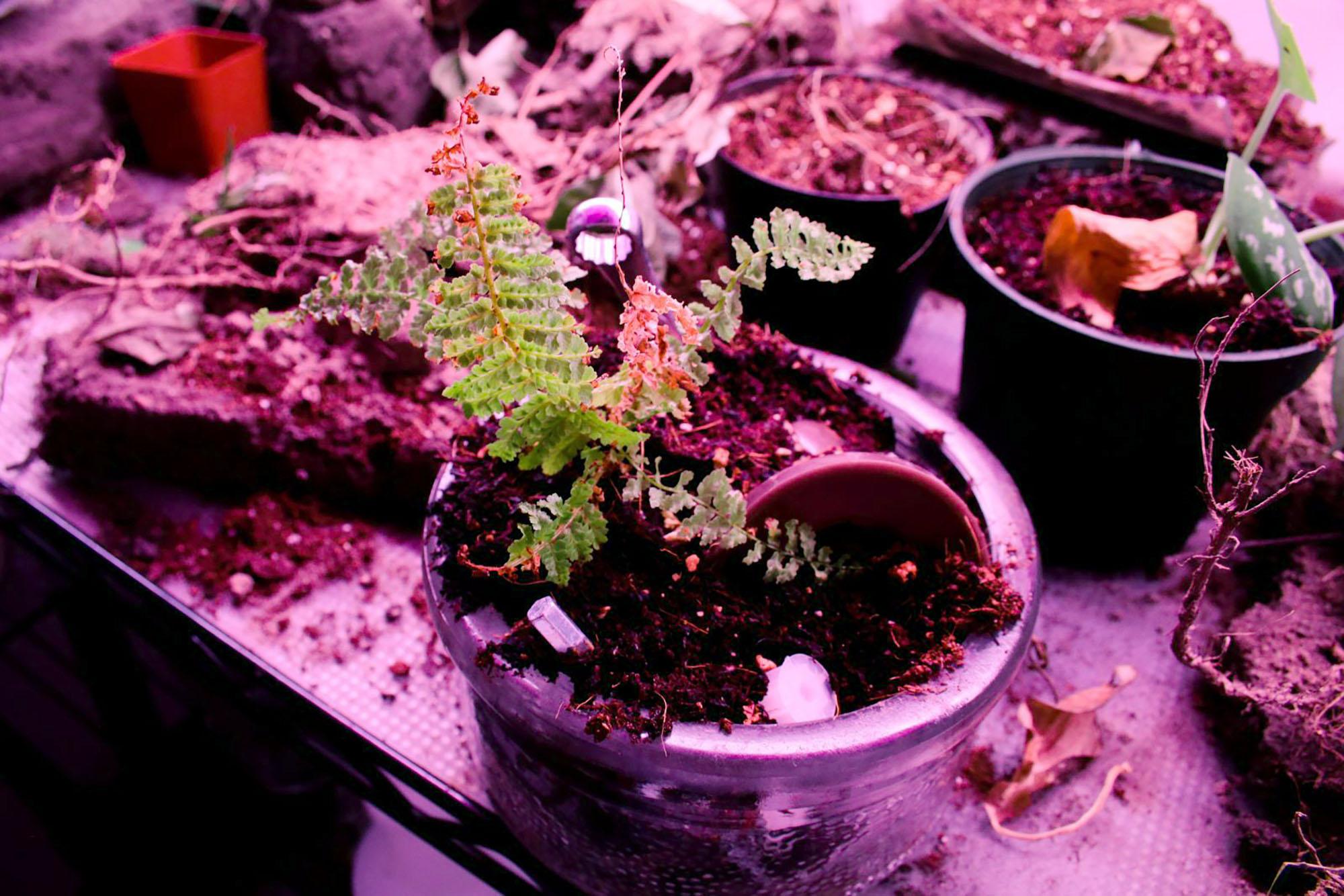 Amira Hegazy - Remnant Planter 2