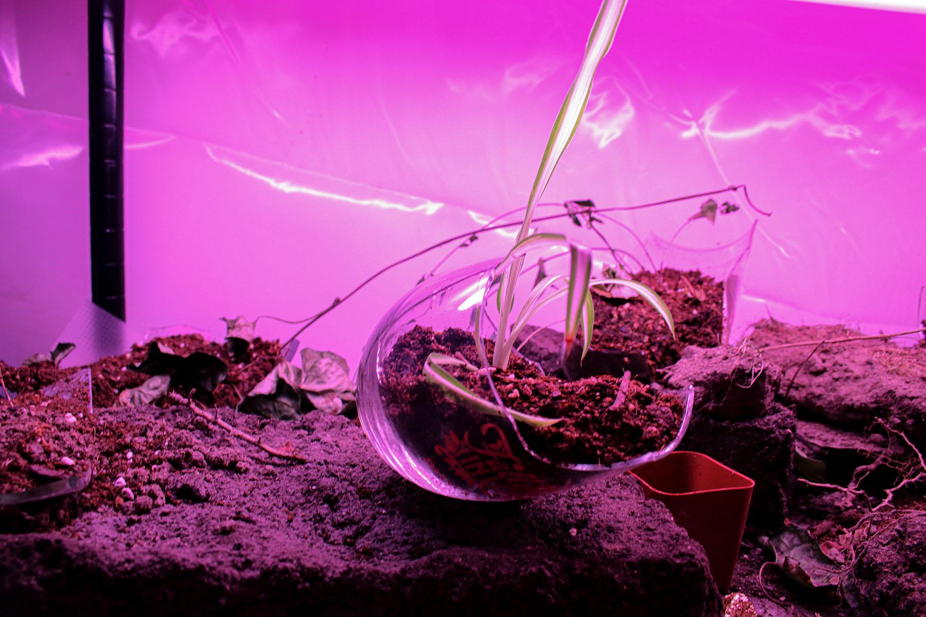 Amira Hegazy - Remnant Planter 1