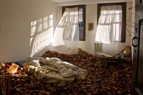 llio sophia - Room of Leaves