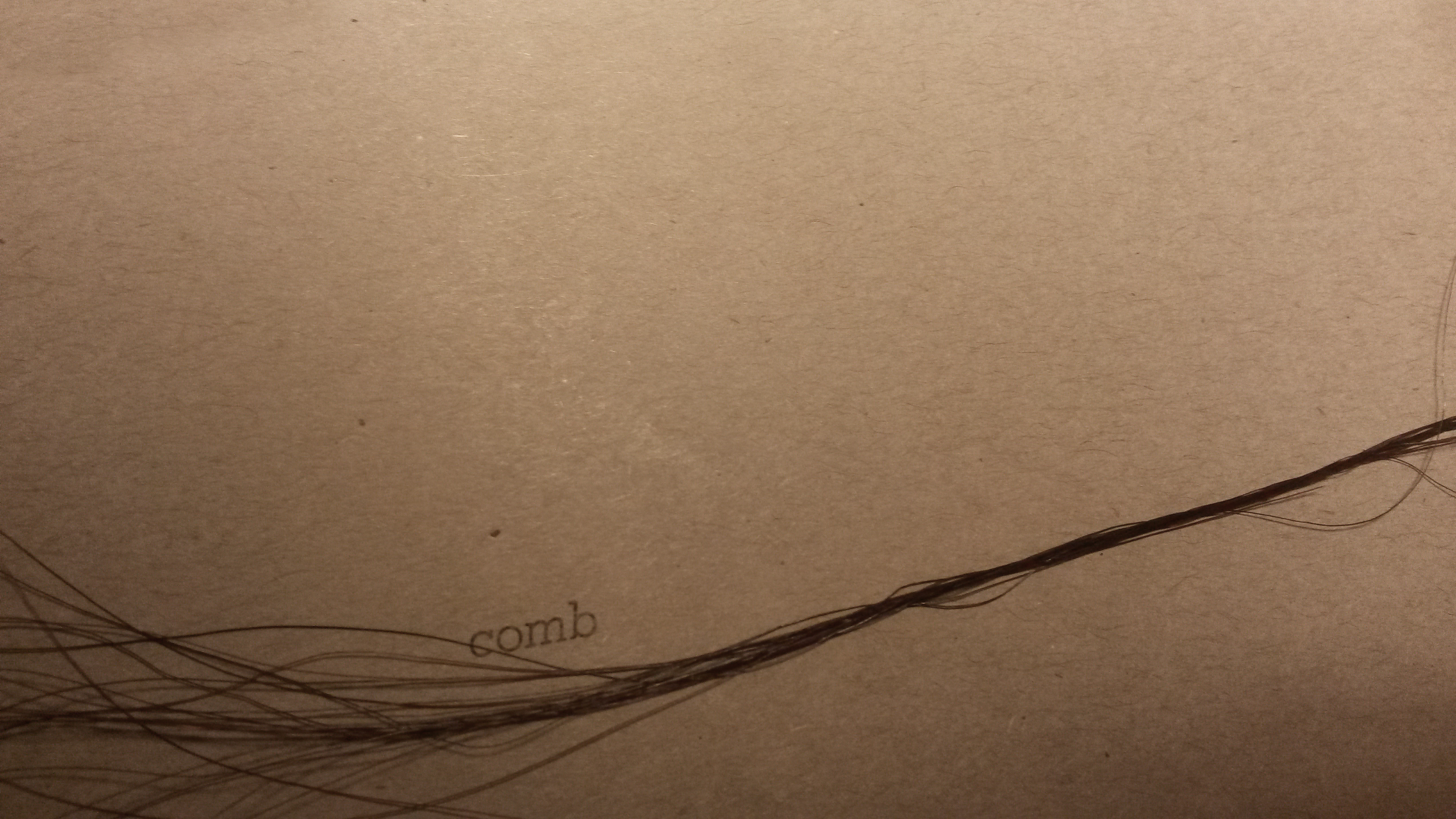 Human Hair Split Ends Under Microscope 72307 | VIZUALIZE
