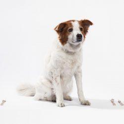 Kyuho Kim-Canine Cutlery